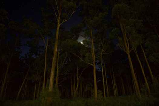 green leaves forest trees during nighttime